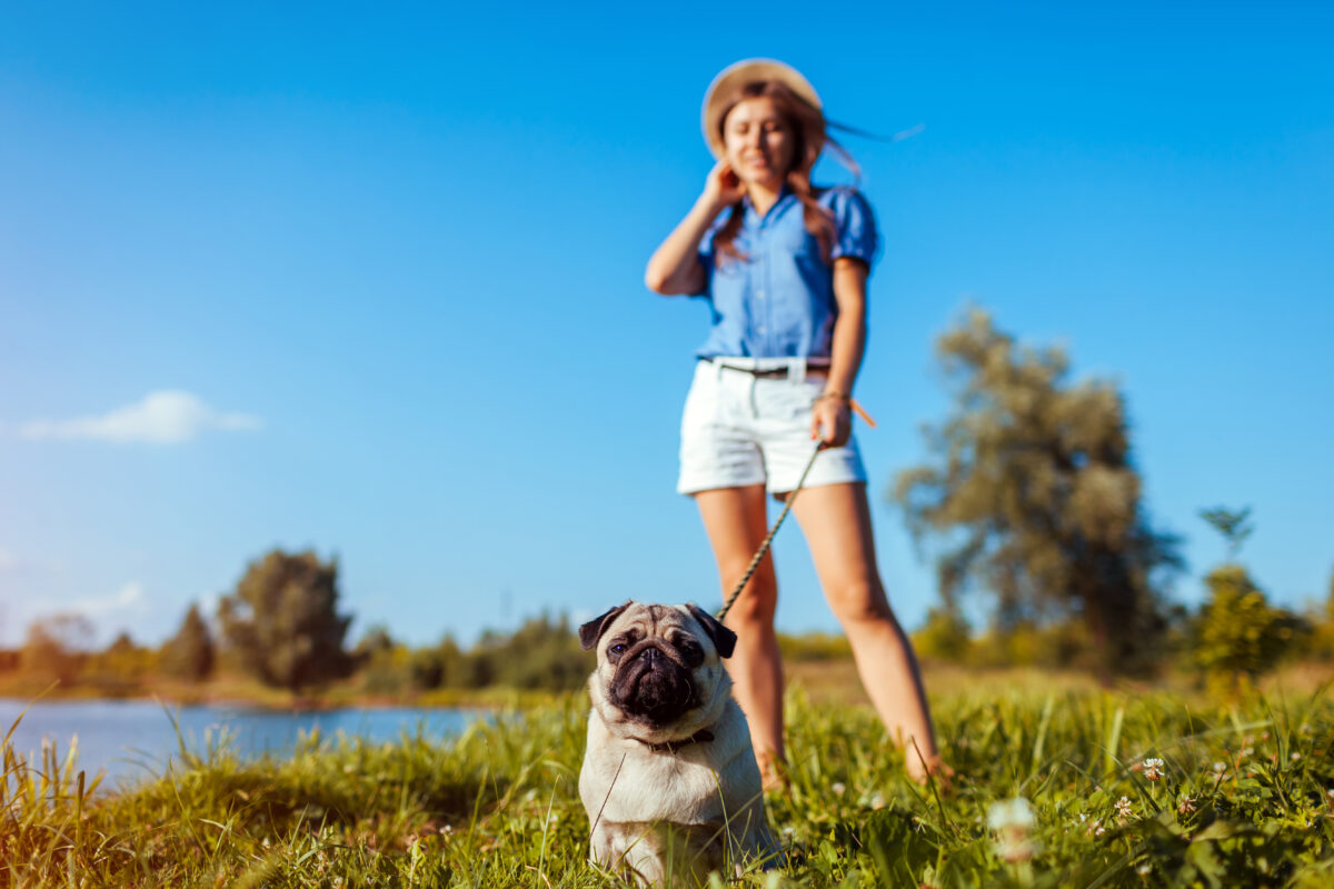 The Significance of a Personal Dog Trainer